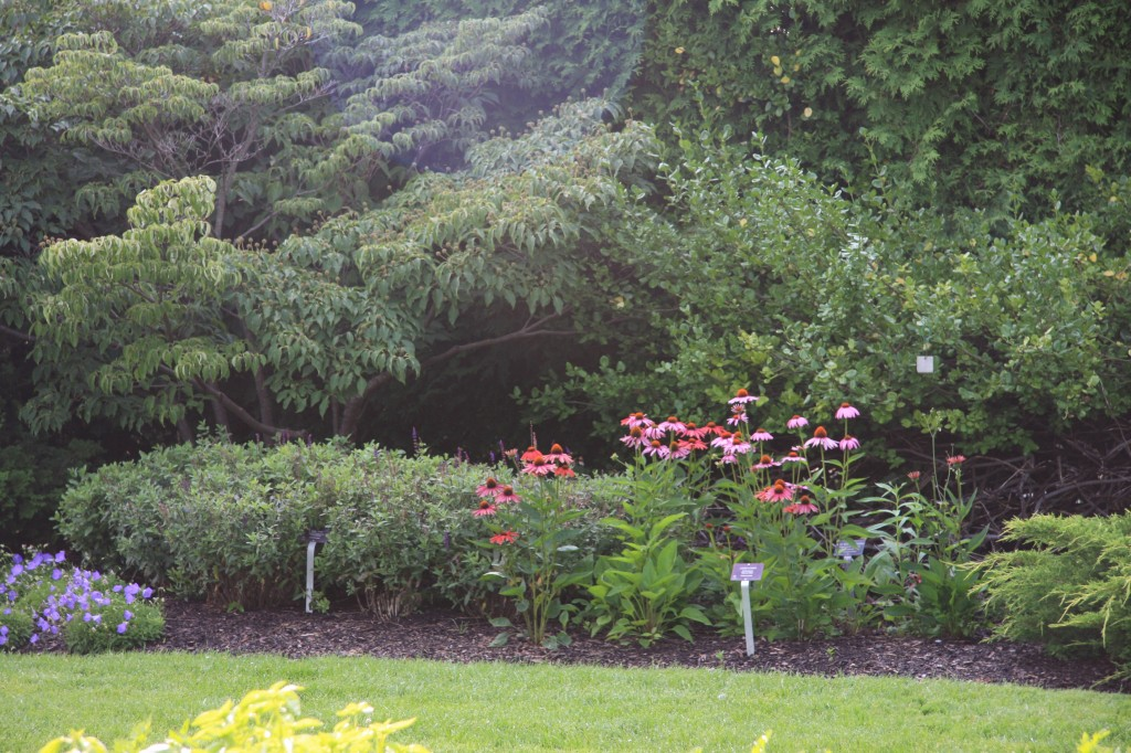 A well-designed border planting featuring Echinacea and Platycodon grandiflorus
